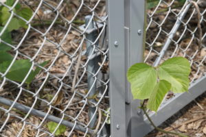 太陽光発電,蜂,蜂の巣
