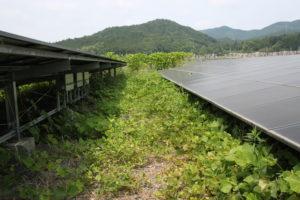 太陽光発電,雑草,除草