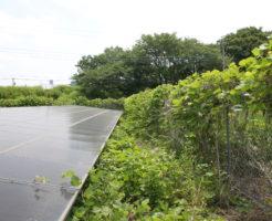 太陽光発電,除草,葛