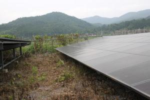太陽光発電,除草効果