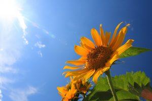 太陽光発電,梅雨明け