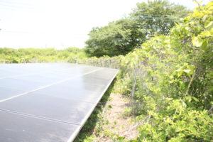太陽光発電,除草,できない