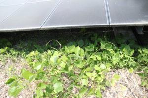 太陽光発電,草,除草剤