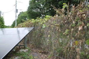 太陽光発電,雑草,対策
