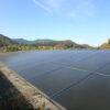 太陽光発電所まさかの11月に除草剤を散布・・・